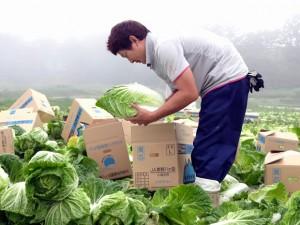 <b>「男前百科 SEASON2 vol.3」</b><br />・野菜は「命の源」<br />・大らかで豪快、芯のぶれない男前<br />午前6時、夢幻的ともいえる真っ白な霧の中、目に飛び込んできたのは &#8230;