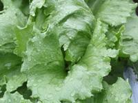 <b>「野辺山高原の野菜をあなたに食べさせたい夏」</b><br />梅雨もまだ明けない日本列島ですが、つかの間の雲の晴れ間からは &#8230;<br /><span>※プレゼントの受付は終了しました