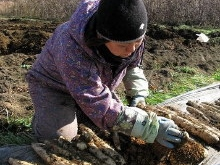 <b>「ぜひあなたに食べてほしいナガイモがここに」</b><br />天空の大地を掘るがごときダイナミックなナガイモの収穫が、八ヶ岳を望む野辺山高原で行われていま &#8230;