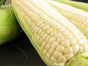 <b>「毎週!おいしい!プレゼント」</b><br />長野県の高原野菜の名産地、JA長野八ヶ岳より色白美人のトウモロコシ「ホワイトコーン」をお届けいた &#8230;
