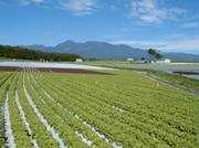 <b>「長野県で育つレタスは今が食べどき」</b><br />とにかく気温にデリケートなレタス。レタスは15℃から20℃で最も良く生育します。高原の冷涼な気候 &#8230;