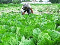<b>「野辺山高原の白菜は夏だっておいしいのです」</b><br />連載最終回に紹介するのは、野辺山高原産のビタミンC、カルシウム &#8230;<br /><span>※プレゼントの受付は終了しました